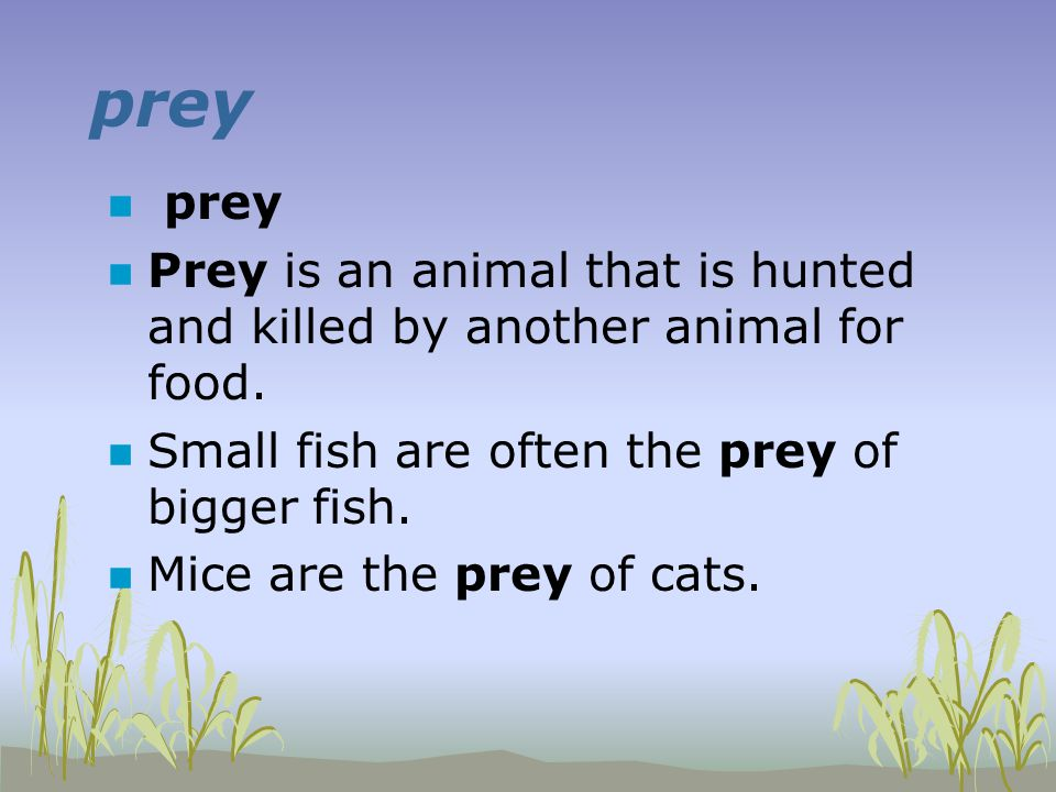 prey n prey n Prey is an animal that is hunted and killed by another animal for food.