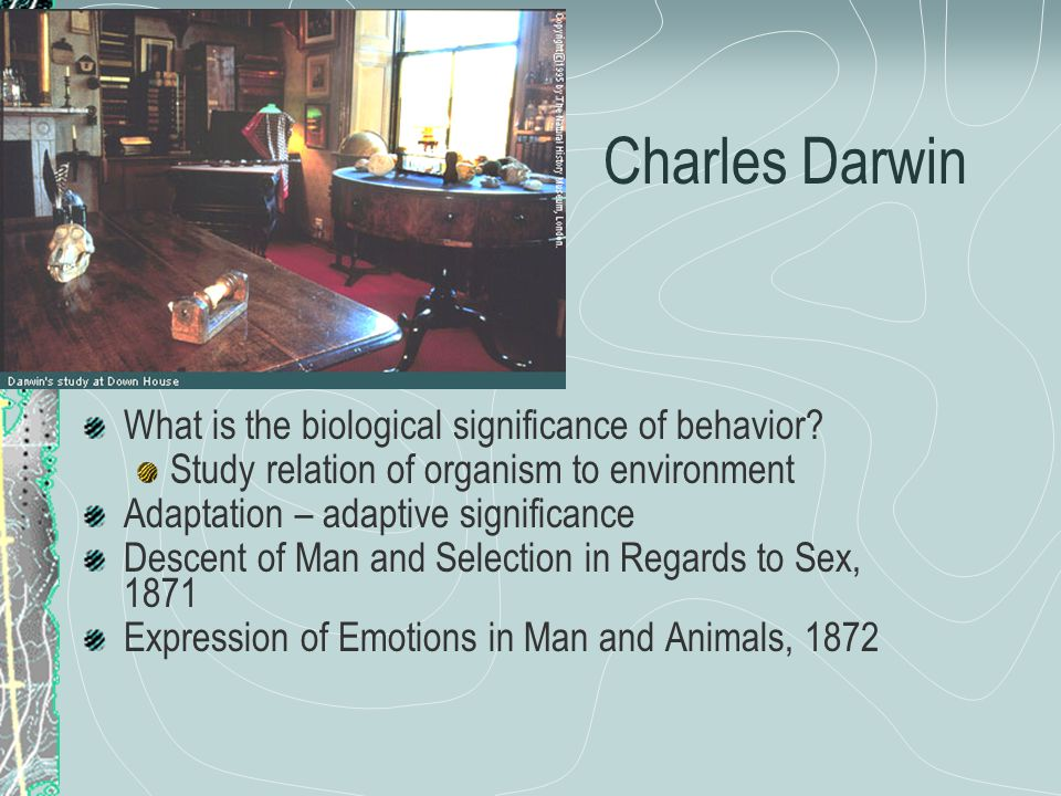 Darwin & the Tree of Life BD (Before Darwin) AD (After Darwin)