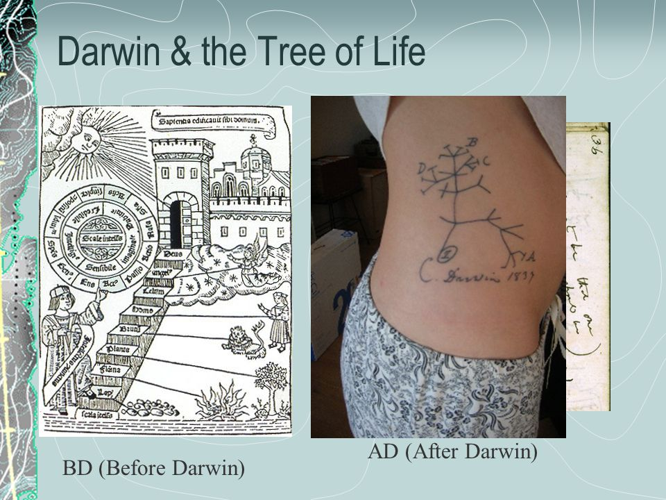 Darwin & the Tree of Life BD (Before Darwin) AD (After Darwin)