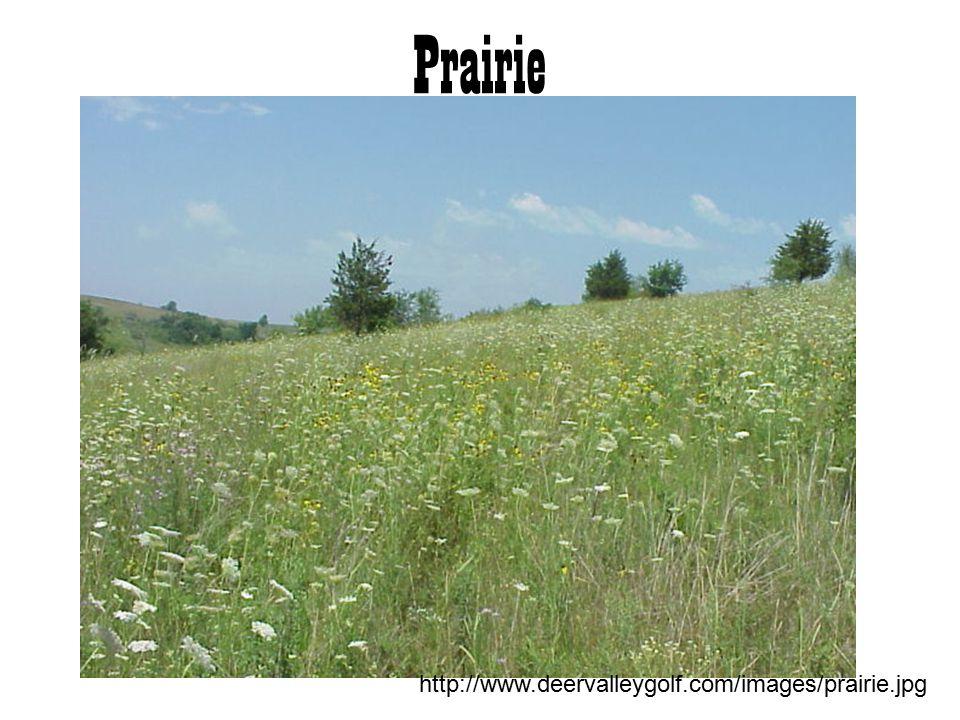 Prairie http://www.deervalleygolf.com/images/prairie.jpg