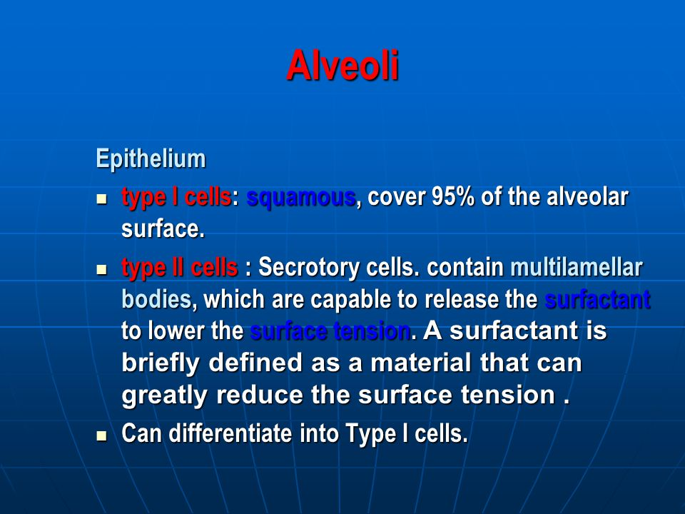 Alveoli Epithelium type I cells: squamous, cover 95% of the alveolar surface.
