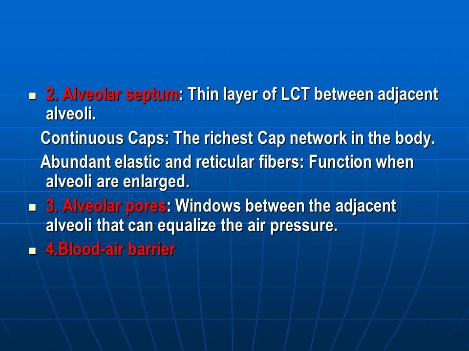 2. Alveolar septum: Thin layer of LCT between adjacent alveoli.