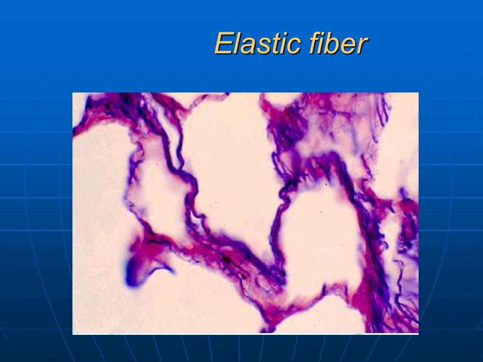 Elastic fiber