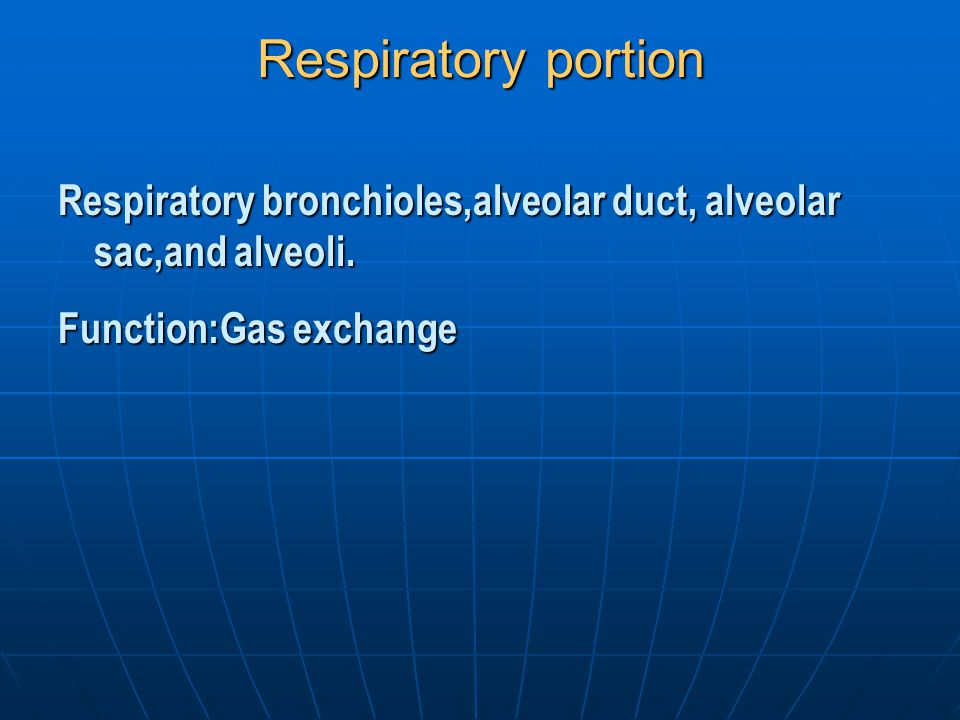 Respiratory portion Respiratory bronchioles,alveolar duct, alveolar sac,and alveoli.