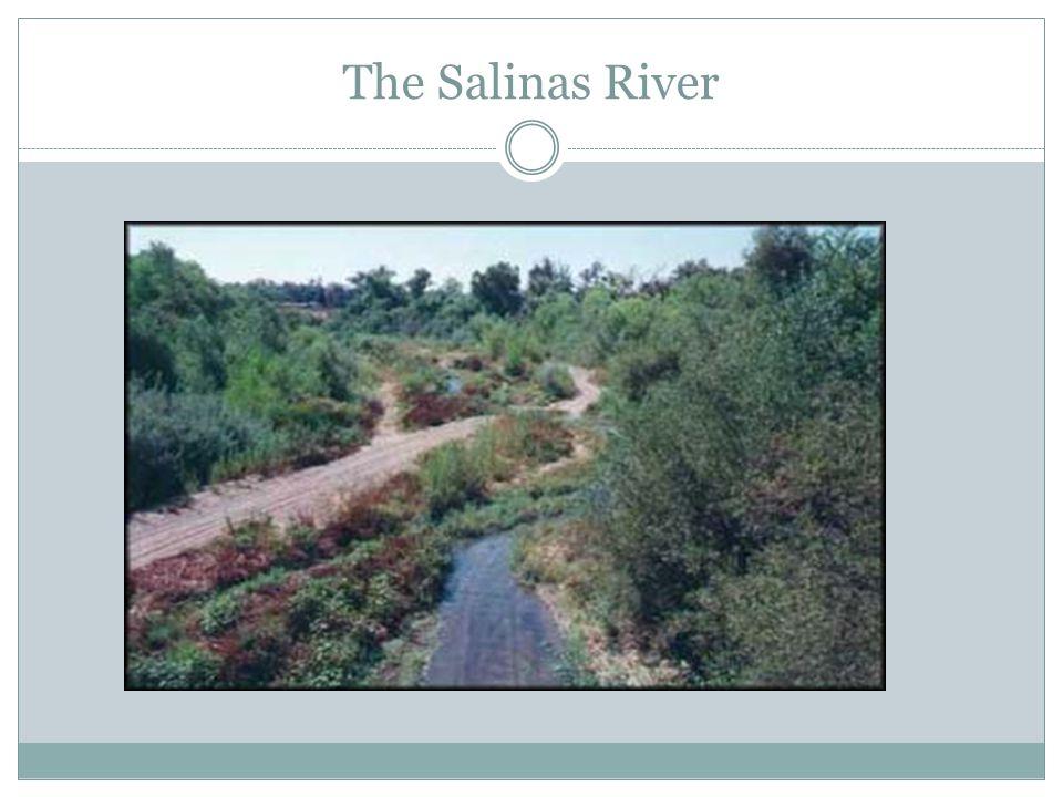 The Salinas River