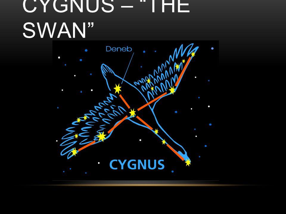 CYGNUS – THE SWAN