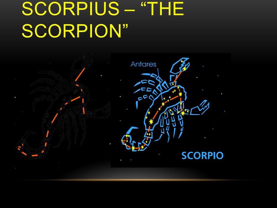 SCORPIUS – THE SCORPION