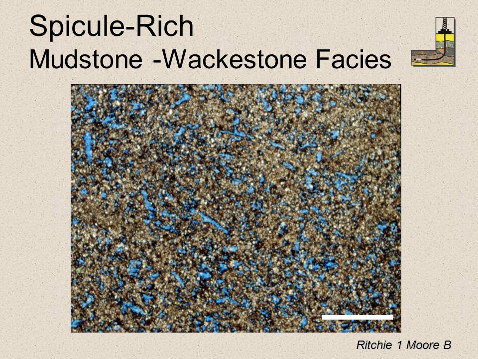 Spicule-Rich Mudstone -Wackestone Facies Ritchie 1 Moore B