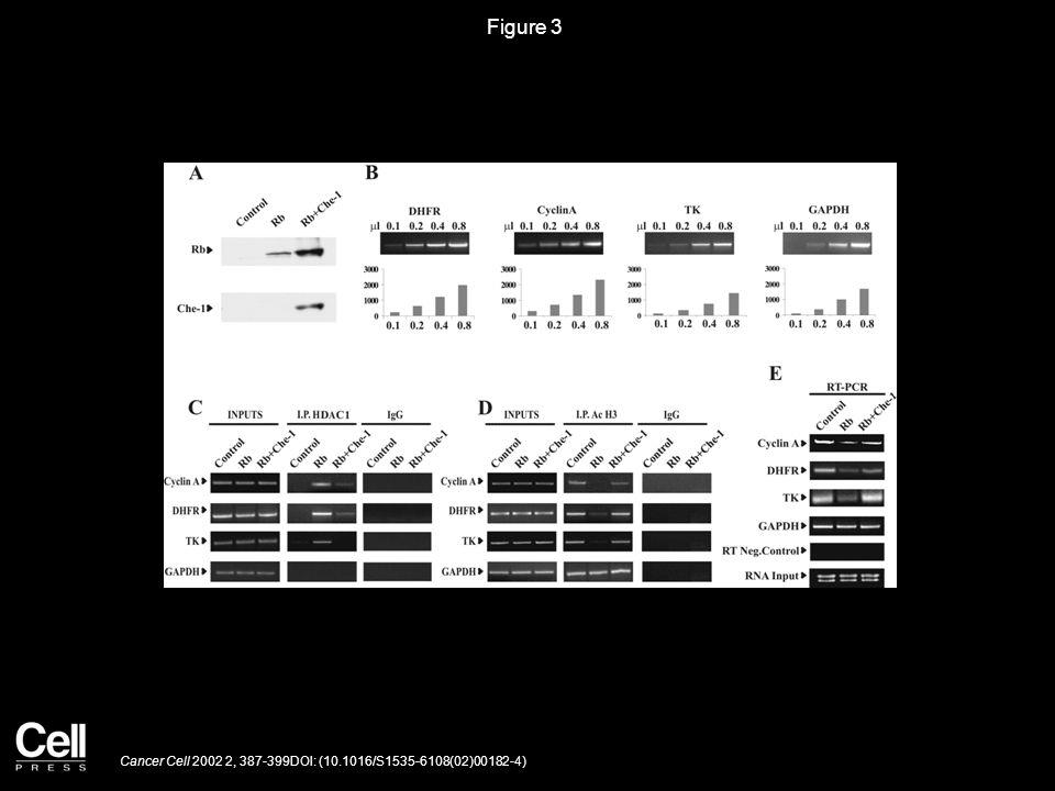 Figure 4 Cancer Cell 2002 2, 387-399DOI: (10.1016/S1535-6108(02)00182-4)