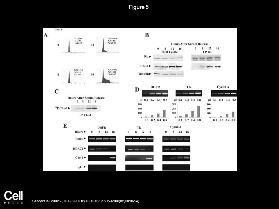 Figure 6 Cancer Cell 2002 2, 387-399DOI: (10.1016/S1535-6108(02)00182-4)