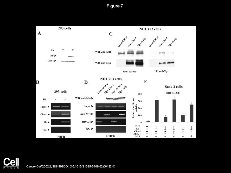 Figure 8 Cancer Cell 2002 2, 387-399DOI: (10.1016/S1535-6108(02)00182-4)