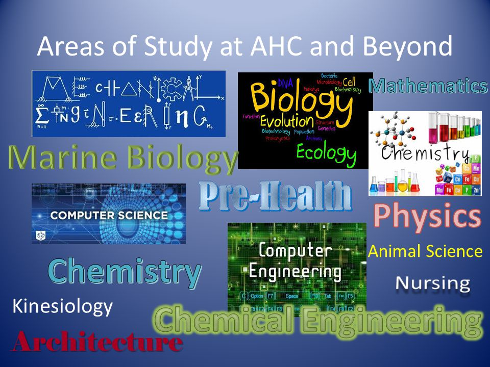 Areas of Study at AHC and Beyond Architecture Kinesiology Animal Science