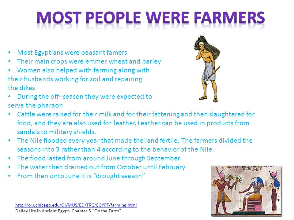 Most Egyptians were peasant famers Their main crops were emmer wheat and barley Women also helped with farming along with their husbands working for s