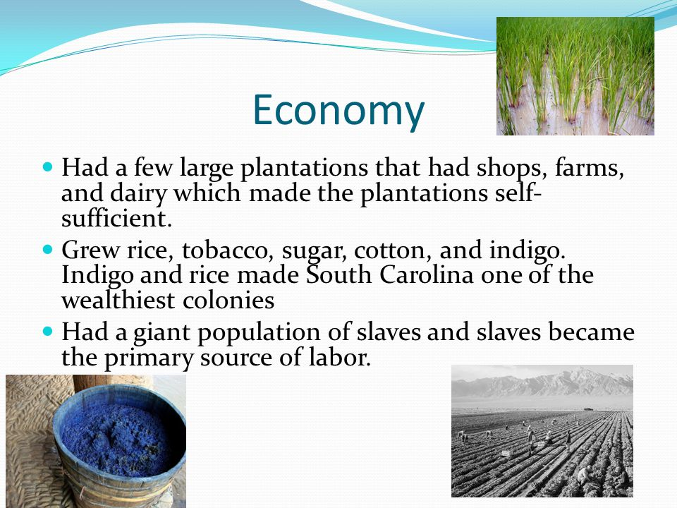 Economy Had a few large plantations that had shops, farms, and dairy which made the plantations self- sufficient.