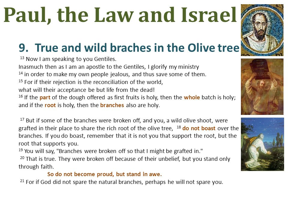 9.True and wild braches in the Olive tree 13 Now I am speaking to you Gentiles.