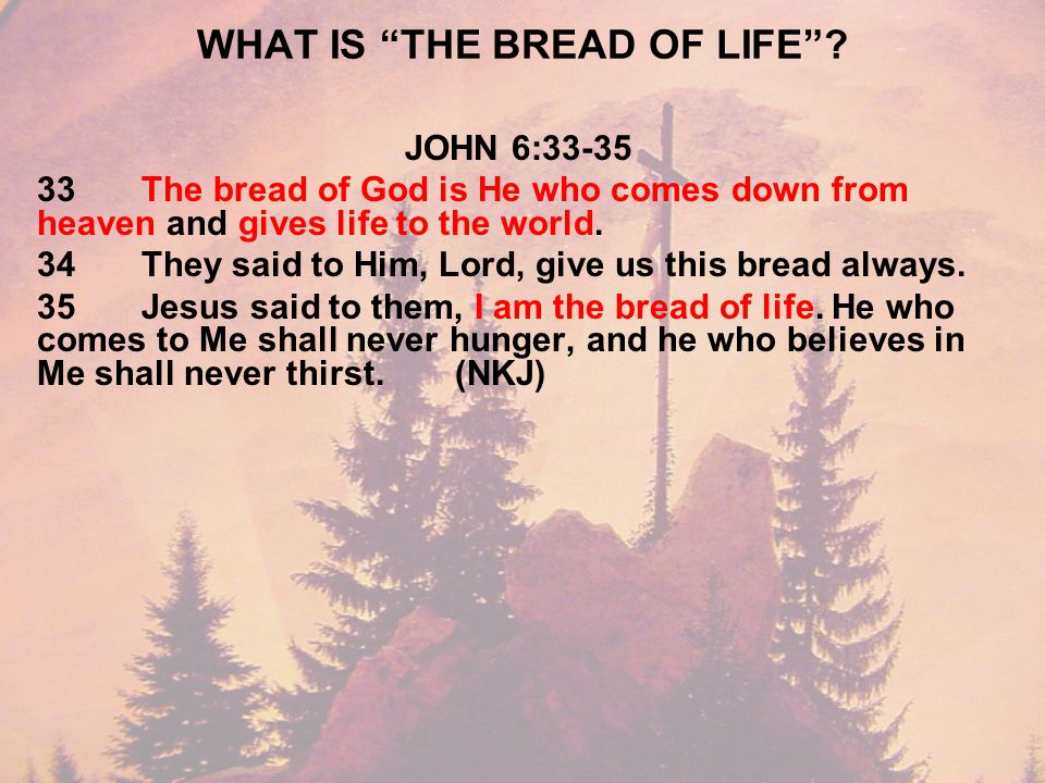 WHAT IS THE BREAD OF LIFE .