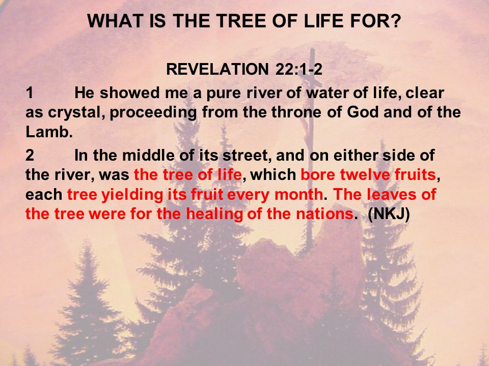 WHAT IS THE TREE OF LIFE FOR.
