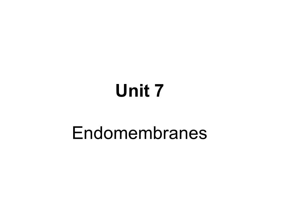 Unit 7 Endomembranes