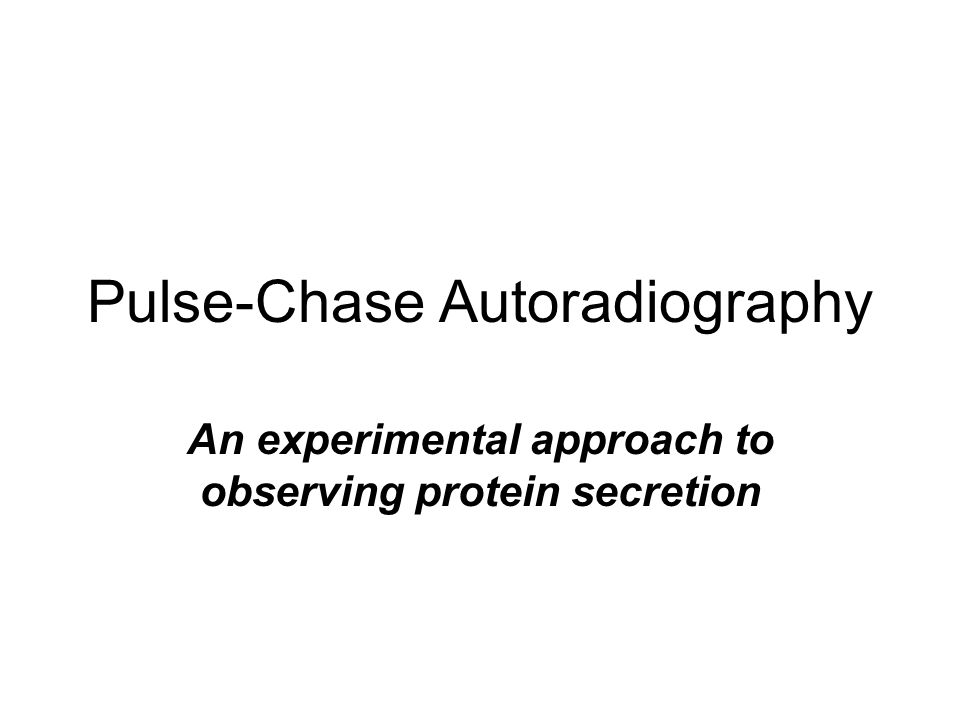 Pulse-Chase Autoradiography An experimental approach to observing protein secretion