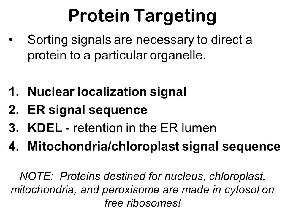 Protein Targeting Sorting signals are necessary to direct a protein to a particular organelle. 1.Nuclear localization signal 2.ER signal sequence 3.KD