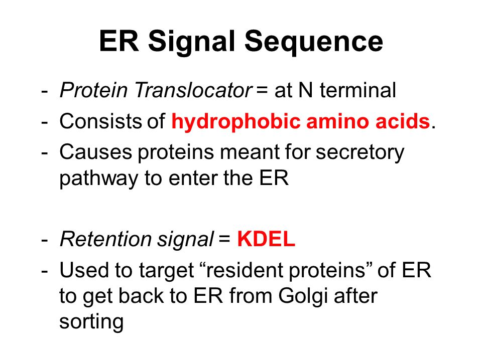 ER Signal Sequence -Protein Translocator = at N terminal -Consists of hydrophobic amino acids. -Causes proteins meant for secretory pathway to enter t