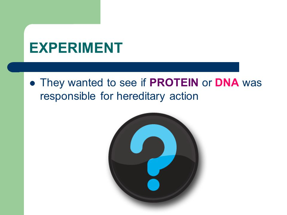 EXPERIMENT They wanted to see if PROTEIN or DNA was responsible for hereditary action