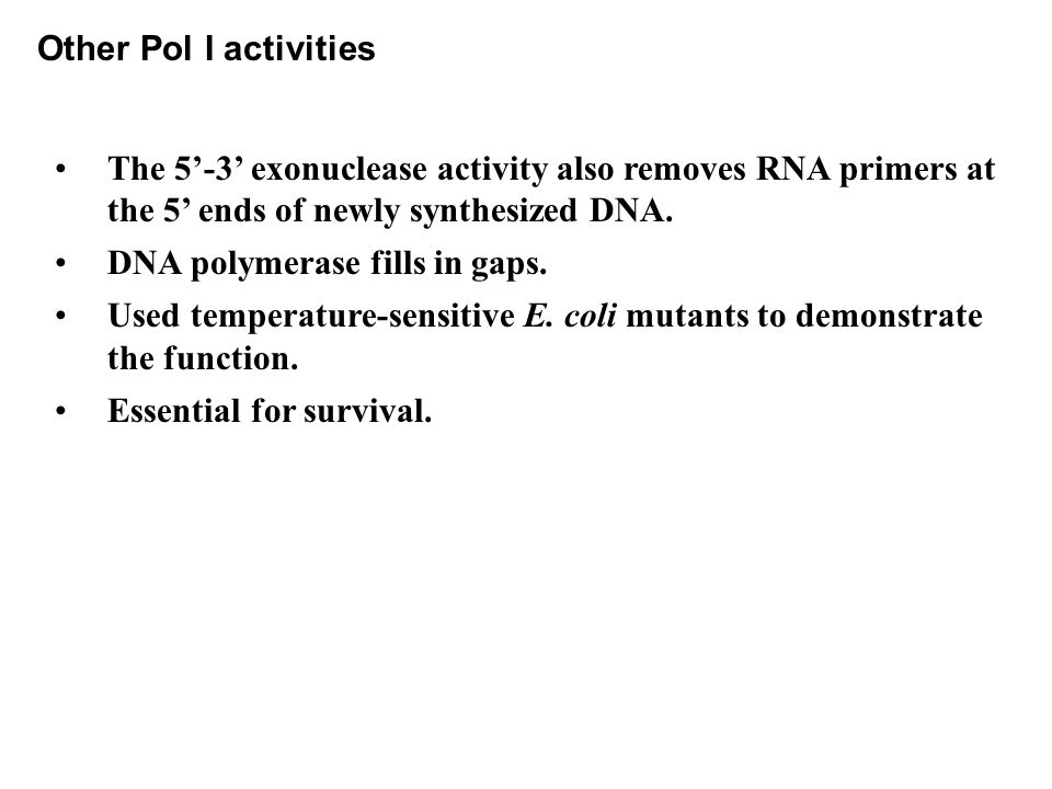 Other Pol I activities The 5'-3' exonuclease activity also removes RNA primers at the 5' ends of newly synthesized DNA.