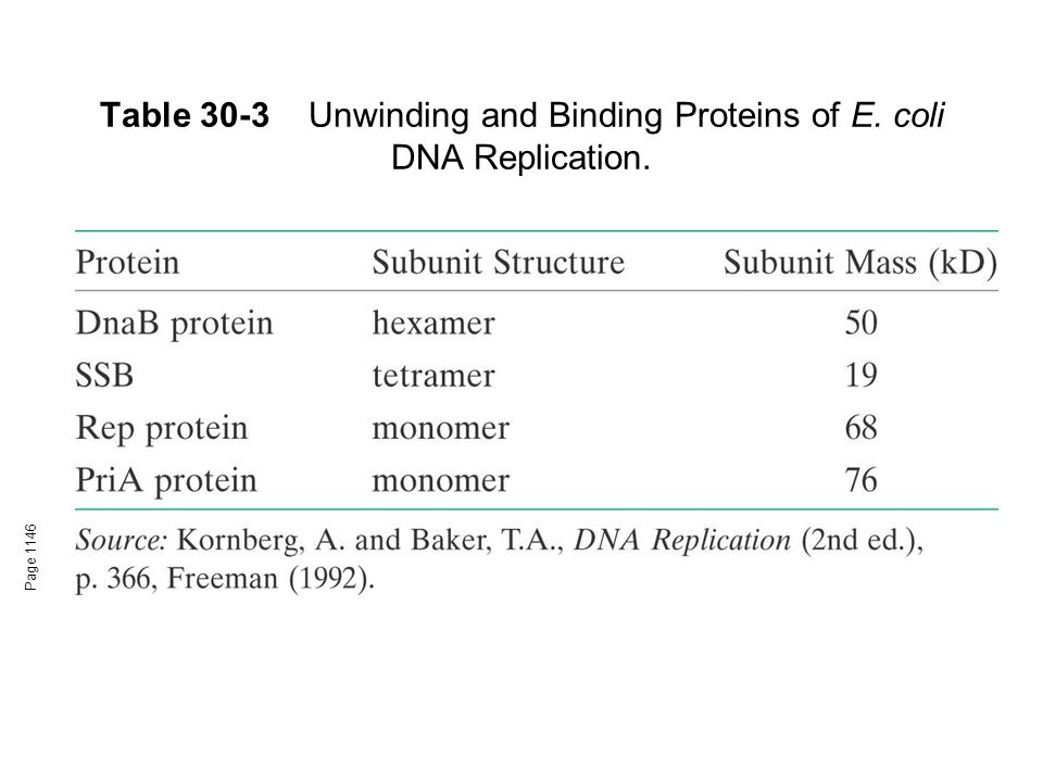 Table 30-3Unwinding and Binding Proteins of E. coli DNA Replication. Page 1146