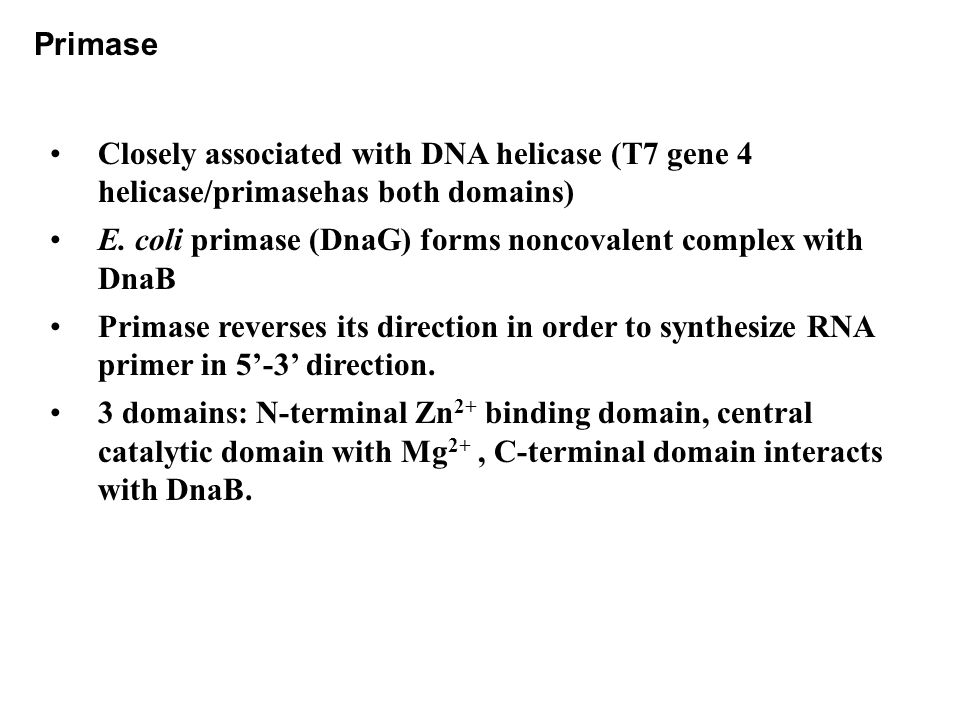 Primase Closely associated with DNA helicase (T7 gene 4 helicase/primasehas both domains) E.
