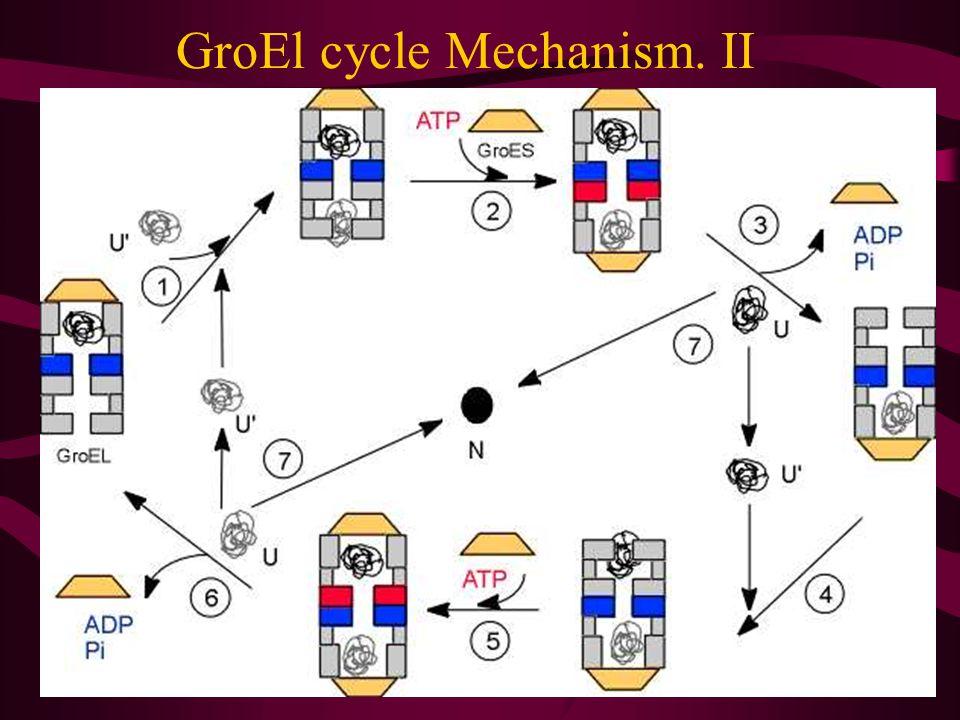 GroEl cycle Mechanism.