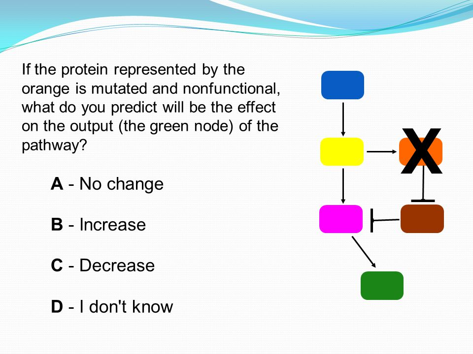 If the protein represented by the orange is mutated and nonfunctional, what do you predict will be the effect on the output (the green node) of the pathway.