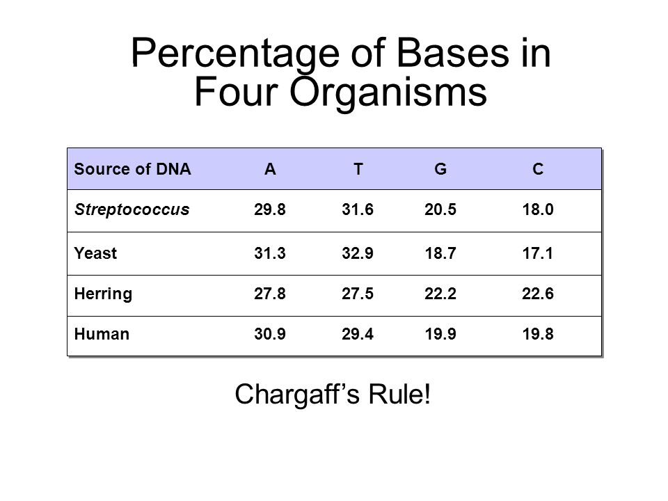 Percentage of Bases in Four Organisms Section 12-1 Source of DNAATGC Streptococcus29.831.620.518.0 Yeast31.332.918.717.1 Herring27.827.522.222.6 Human