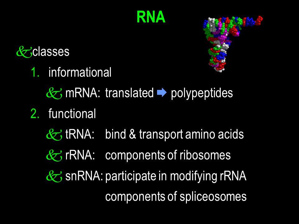 k classes 1. informational k mRNA:translated  polypeptides 2.