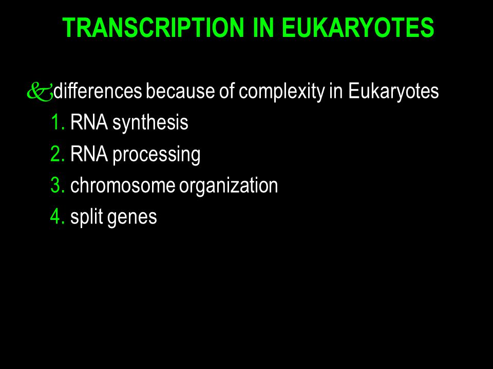 TRANSCRIPTION IN EUKARYOTES kdifferences because of complexity in Eukaryotes 1. RNA synthesis 2. RNA processing 3. chromosome organization 4. split ge