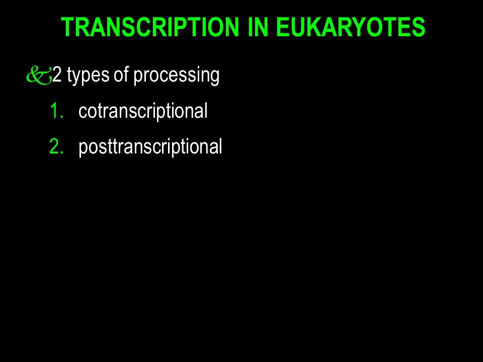 TRANSCRIPTION IN EUKARYOTES k2 types of processing 1. cotranscriptional 2. posttranscriptional