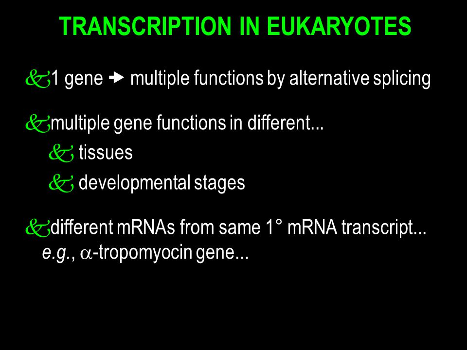 k1 gene  multiple functions by alternative splicing kmultiple gene functions in different... k tissues k developmental stages kdifferent mRNAs from s