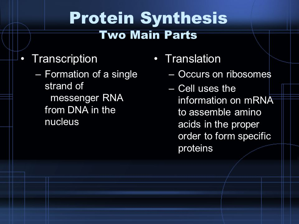 Protein Synthesis Two Main Parts Transcription –Formation of a single strand of messenger RNA from DNA in the nucleus Translation –Occurs on ribosomes