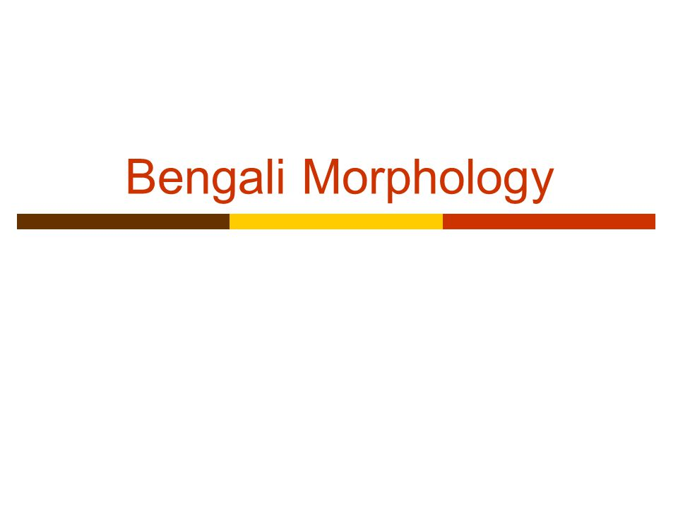 Bengali Morphology