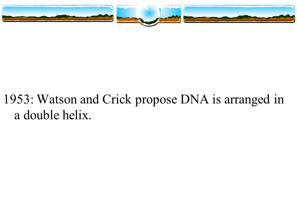 1953: Watson and Crick propose DNA is arranged in a double helix.
