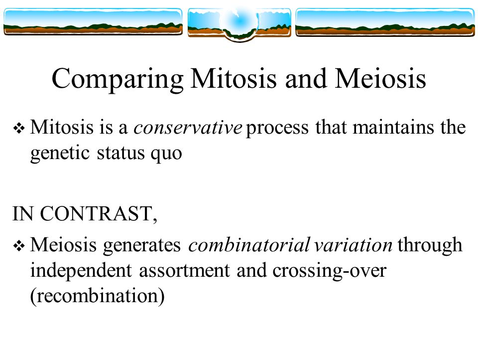 Comparing Mitosis and Meiosis Mitosis: One cell division resulting in two diploid daughter cells Meiosis: Two cell divisions resulting in four haploid products …..