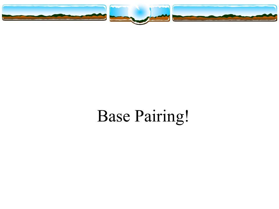 Base Pairing!