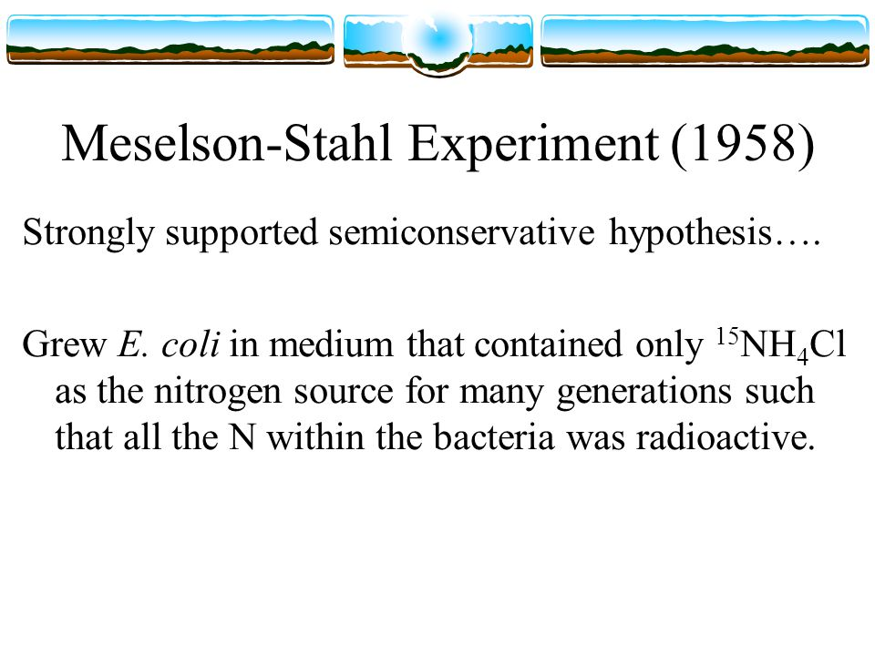 Meselson-Stahl Experiment (1958) Strongly supported semiconservative hypothesis….
