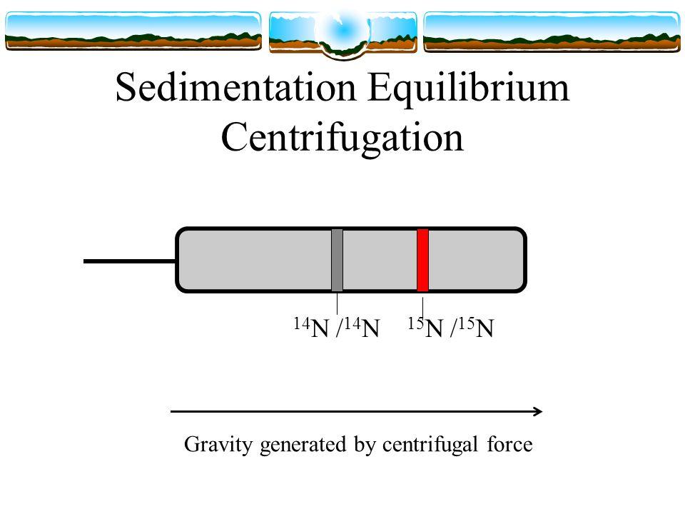 Sedimentation Equilibrium Centrifugation 14 N / 14 N 15 N / 15 N Gravity generated by centrifugal force