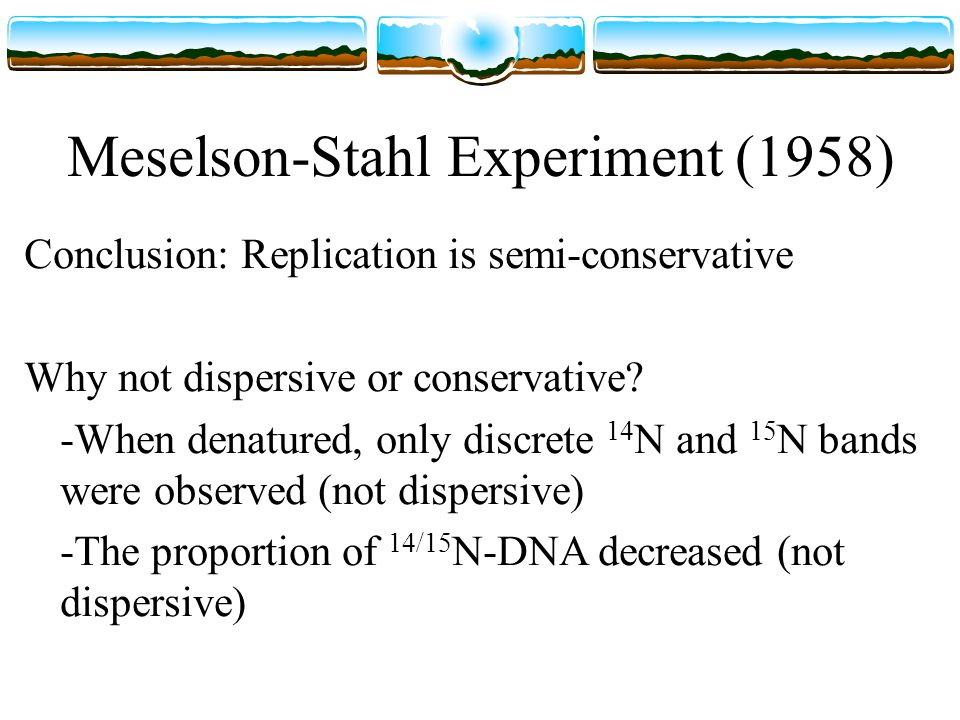 Meselson-Stahl Experiment (1958) Conclusion: Replication is semi-conservative Why not dispersive or conservative.