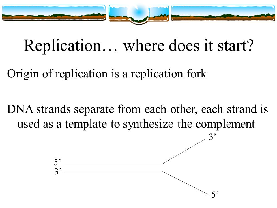 Replication… where does it start.