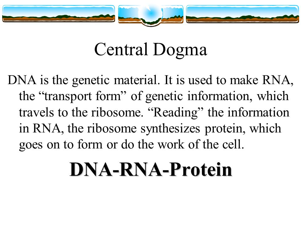 Central Dogma DNA is the genetic material.