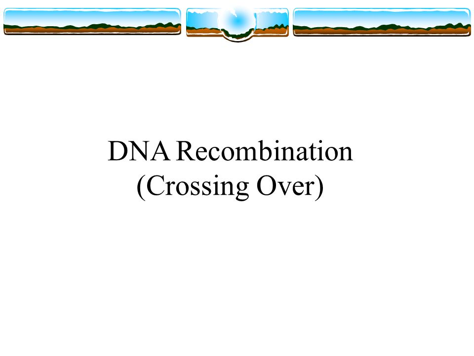 DNA Recombination (Crossing Over)