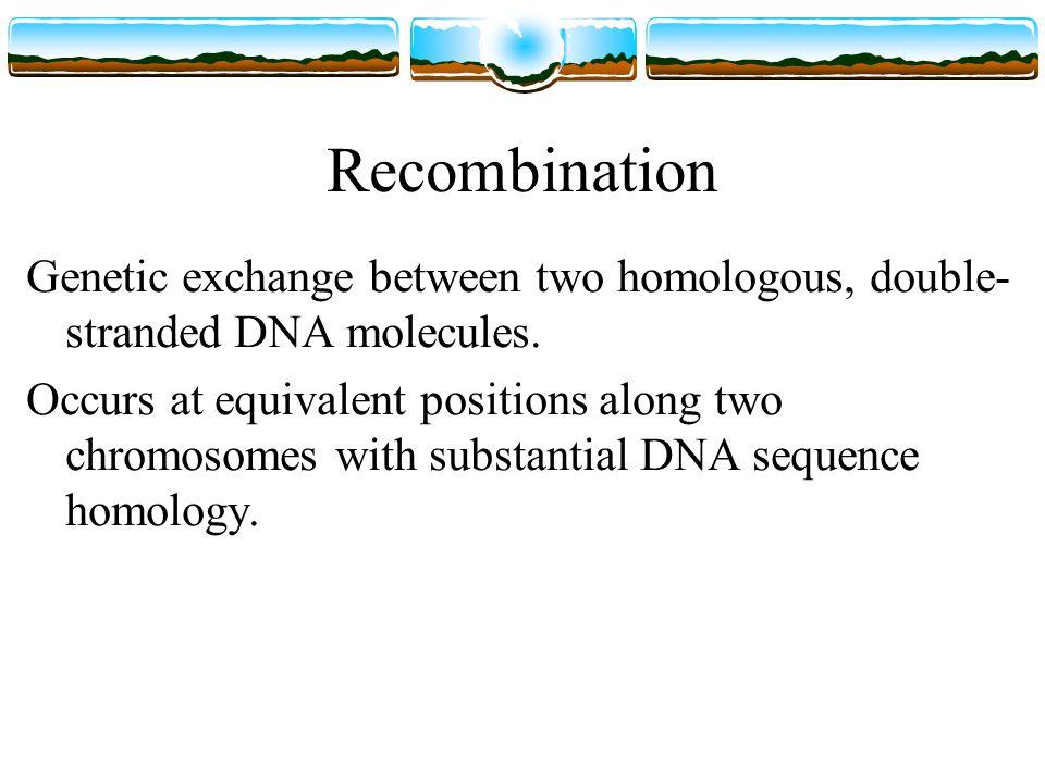 Recombination Genetic exchange between two homologous, double- stranded DNA molecules.