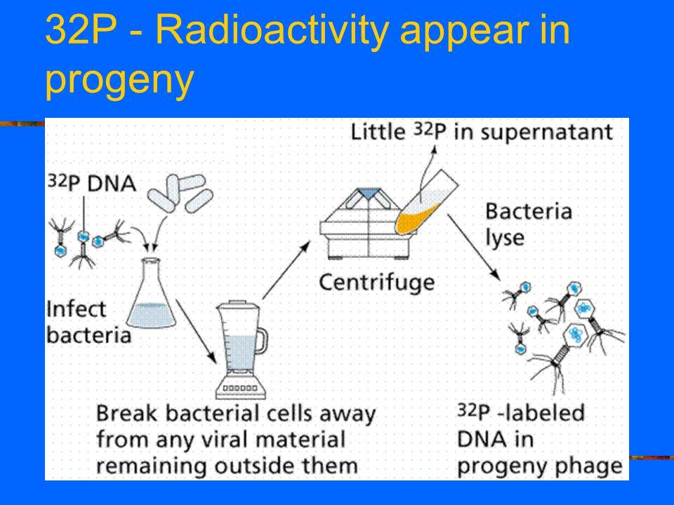 32P - Radioactivity appear in progeny
