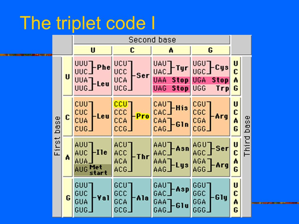 The triplet code I